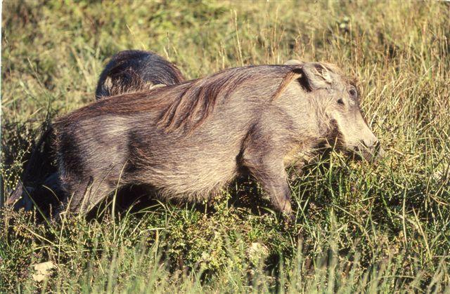 Bilder äthiopien tiere